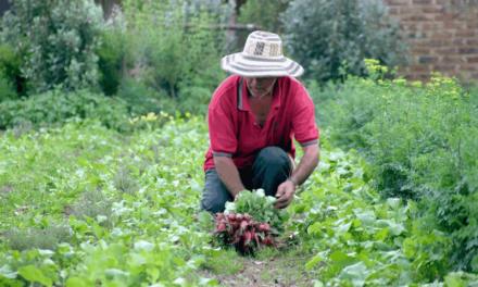 BOLETIN 25: Productores campesinos- Fecha límite para inscripción al Mercado Campesino