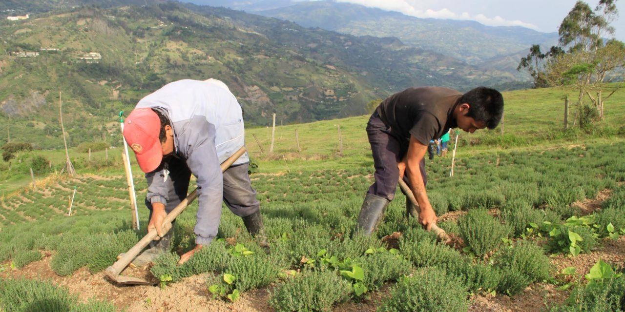 FAO y RAPE tienen el plan para promover el desarrollo rural en la región