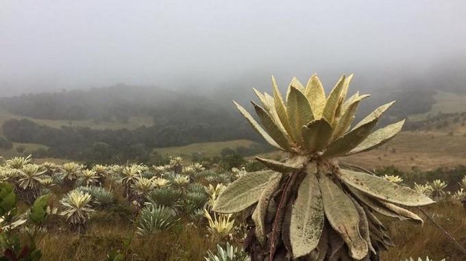 MinAmbiente invita al país a proteger los 37 páramos colombianos
