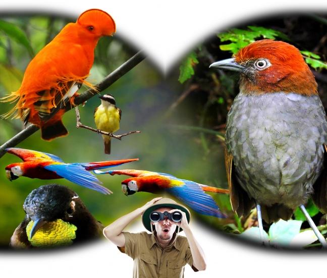 Según la revista The Economist, vista hermosa es un paraíso para el avistamiento de aves