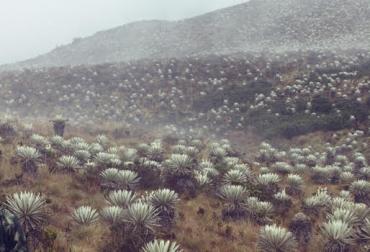 Cundinamarca en sintonía con sus páramos
