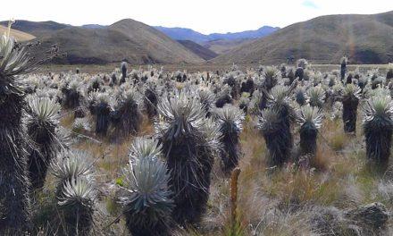 Gobernación supera 10 mil hectáreas adquiridas en ecosistemas estratégicos.
