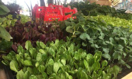La RAP-E promueve la agricultura urbana.