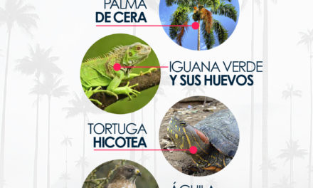 Especies Amenazadas en Semana Santa
