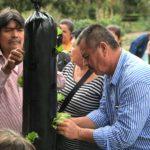 Comunidad de Flandes da sus primeros pasos en la agricultura urbana