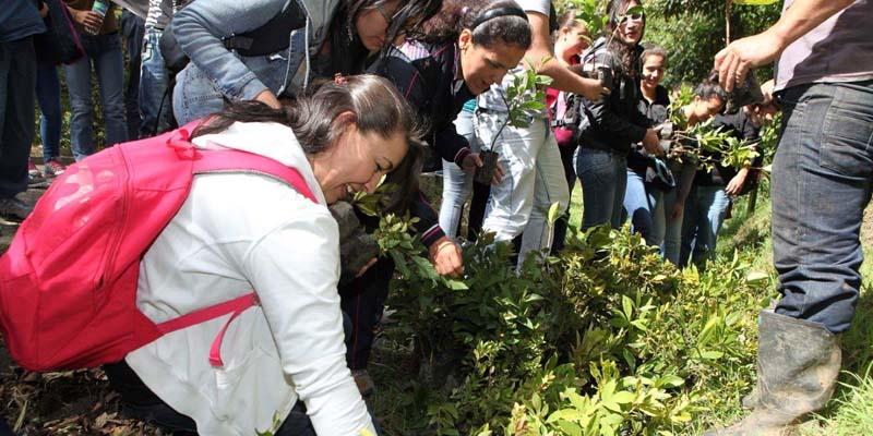 Siembra de 44.000 árboles para revitalizar la cuenca del río Bogotá .