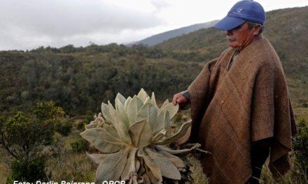 A Boyacá llega el proyecto Guardapáramos Voluntarios.