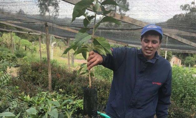 Buscando viveros para la restauración de los páramos en la Región Central