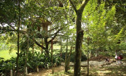 Secretaría del Medio Ambiente del Meta avanza para implementar el Programa Nacional Bosques de Paz en este departamento.