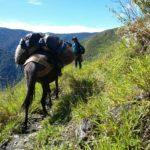 Proyecto 'Ruta de Integración para la Paz' una Alternativa de desarrollo sostenible para la Región Central