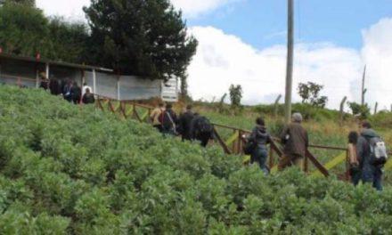 RAPE busca viveros en Usme para restaurar los páramos en Bogotá