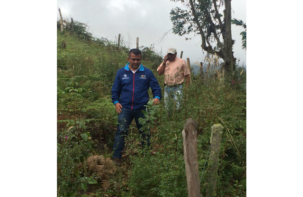 Cundinamarca invirtió $210 millones en reforestación.