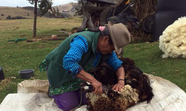 Roselina Soto, la tejedora de sueños de los páramos