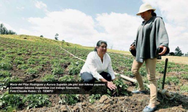 Ellas lideran la cosecha de 387 toneladas de papa en Boyacá