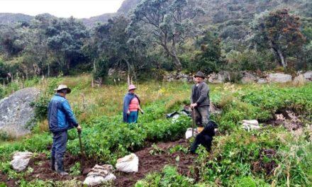 1.300 familias se beneficiarán gracias a programa de cultivos agroecológicos