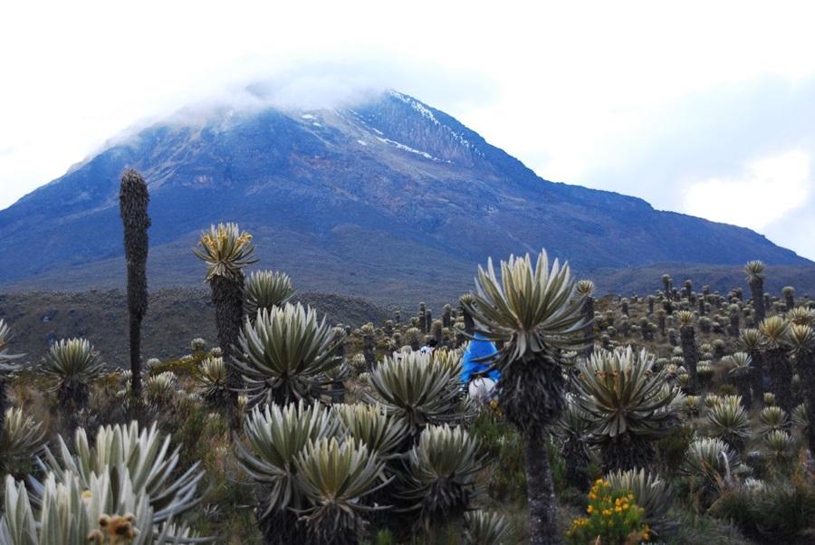 Región Central promueve la recuperación y protección de los páramos colombianos