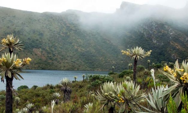 Cundinamarca, el departamento verde del país