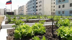 LA REGIÓN CENTRAL le apuesta a la agricultura urbana adrenalina: Informativo Regional