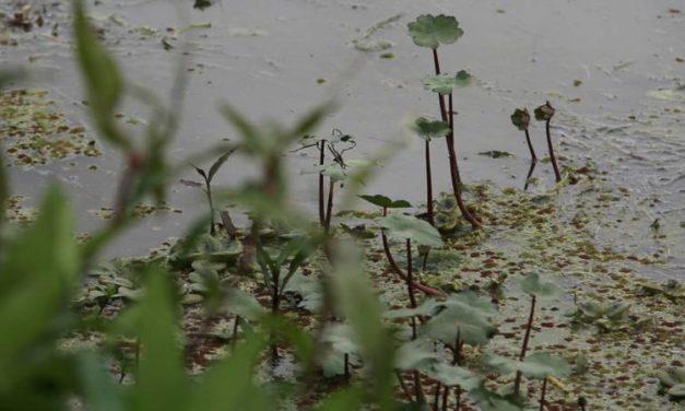 Humedales de Bogotá, declarados sitio Ramsar
