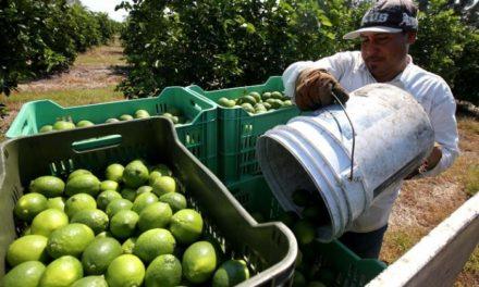Alimentos orgánicos, un negocio para sacarle provecho en Colombia.
