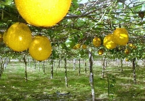 Programas agrícolas y productores en Villavicencio