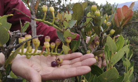 Aquí están los primeros proyectos seleccionados por Colciencias para estudiar la biodiversidad de Boyacá