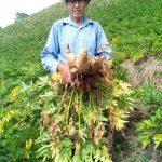 Oportunidades de negocio para pequeños productores del Tolima