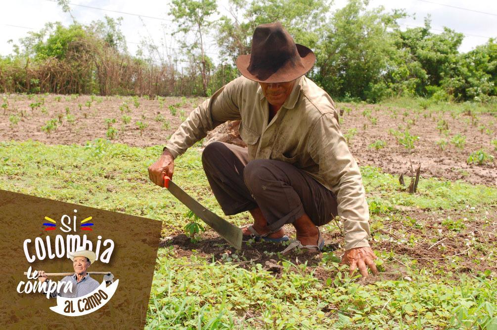 Productores rurales necesitan apoyo por parte del Estado en la compra de sus alimentos