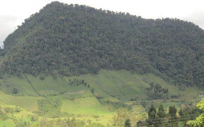 eje21.com.co – Más de 100 nuevos protectores cuidarán los páramos del centro de Colombia