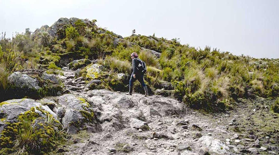 Elcampesino.co – Llegan los Guardapáramos que protegerán estos ecosistemas en el país