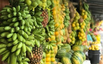 Plan de Abastecimiento Alimentario de la Región Central del país referente en Brasil