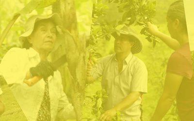 clarindecolombia.info – Campesinos provenientes del centro del país llegarán a vender sus alimentos directamente a la Plaza Distrital de Mercado Kennedy