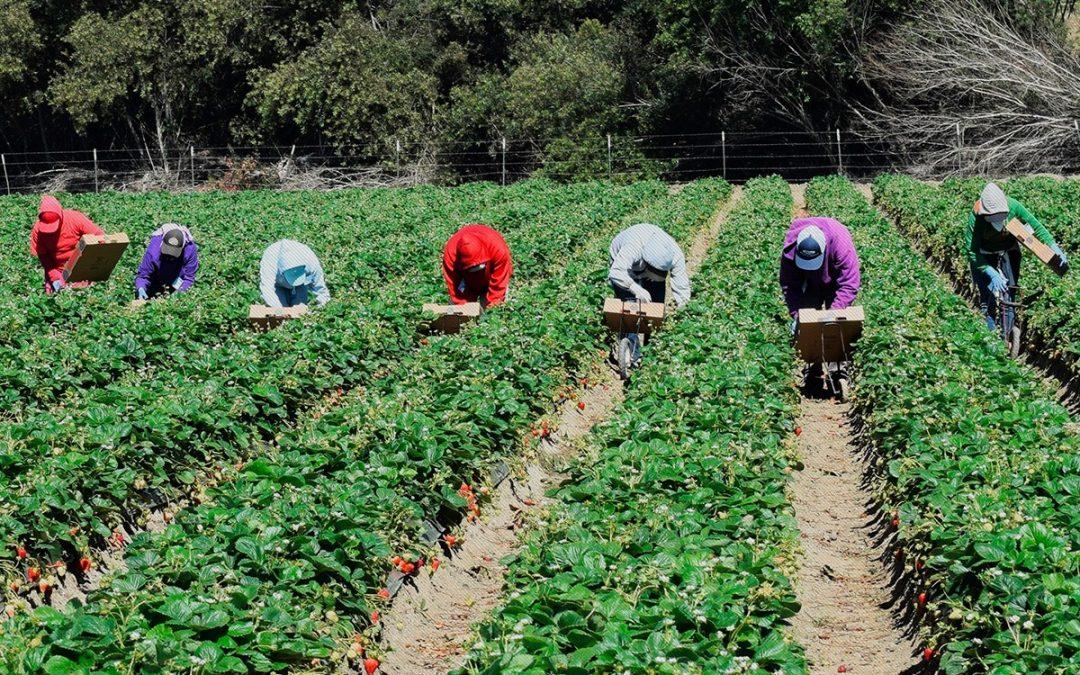 Expertos harán sus aportes al Plan de Abastecimiento Alimentario de la Región Central del país