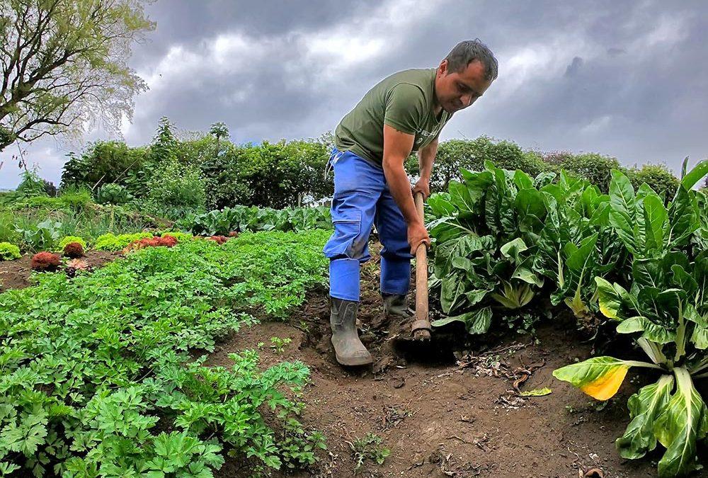 Convocatoria dirigida productores de la Región Central del País
