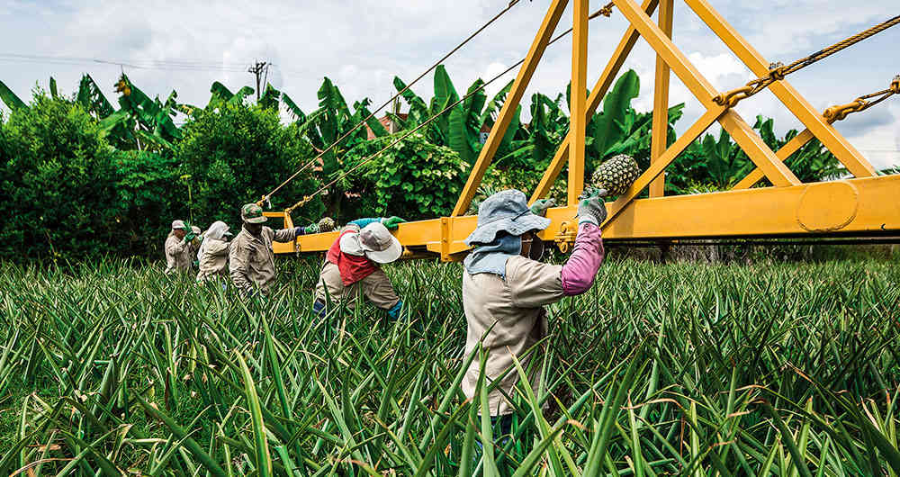 semana.com – El centro del país: una despensa para Colombia