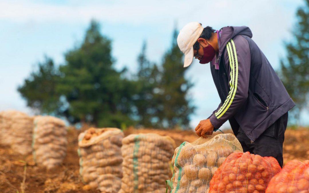 ESPALDARAZO DE LA FAO EN LA IMPLEMENTACIÓN DEL PLAN DE ABASTECIMIENTO ALIMENTARIO DISEÑADO POR LA RAP-E