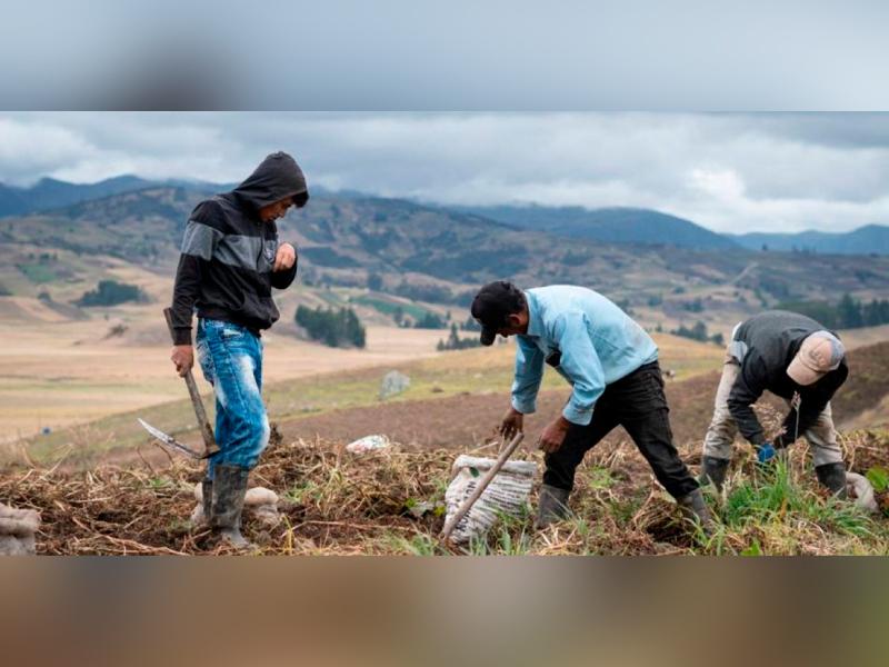 SOCIALIZAN DECRETO QUE PREVÉ ALIVIOS FINANCIEROS A DEUDORES DE CARTERA AGROPECUARIA